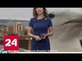 Чайка вмешалась в прогноз погоды на канадском телеканале
