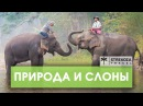 Пхукет! ТРИП ПО АЗИИ || Храм с дикими обезьянами|| STREKOZA Travel
