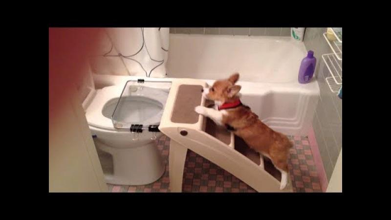 Самые умные и послушные собаки. Подборка 2017