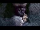 BBC Коко. Горилла, говорящая с людьми / Koko: The Gorilla Who Talks to People / 2016 – Видео Dailymotion