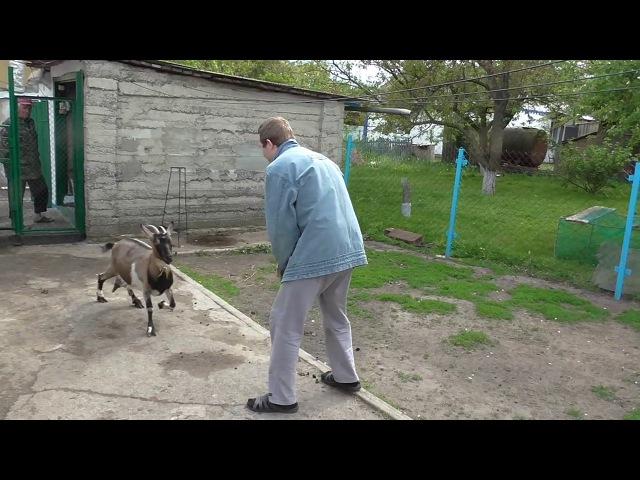Новый Козлик и Толян Воюет С Бешеной Козой в селе :))