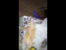 Мой кот самый охуеный!