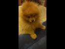 Бешеный пёс нападает на человека.