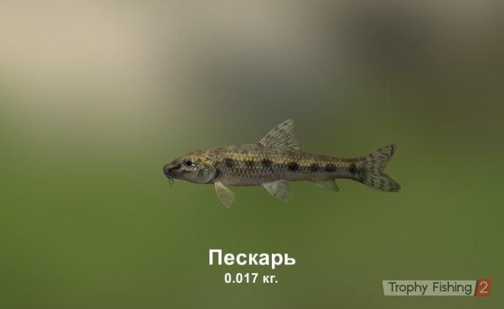 Николай Плакса |