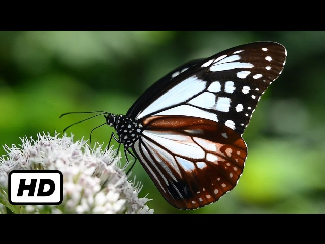 3 HOURS of AMAZING NATURE SCENERY on Planet Earth - The Best Relax Music - 1080p HD