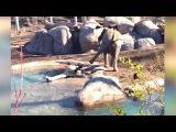 Ozzy Man Reviews Goose vs Elephant