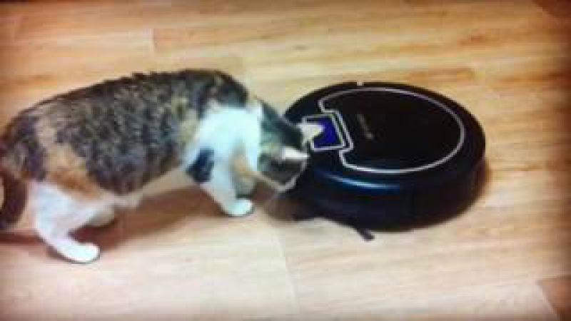 Моя кошка и робот пылесос Kitfort KT-503
