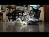 Кот аристократ требует обслуживания