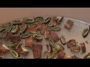 Отвар из Сабельника Чай из сабельника Лечим Миома Эндометриоз Гастрит Ангина Лейкоз Туберкулез