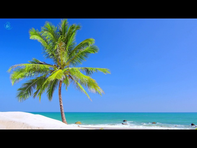 🌊 Paradise Beach On Tropical Island ☀ Beach View Ocean Ambience For Relaxation And Sleeping