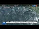 Новости на Россия 24  Рыбопромышленники Сахалина взяли под защиту 20 рек