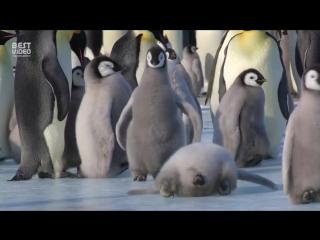 Эти милые пингвины поднимут вам настроение в этот тяжелый рабочий день