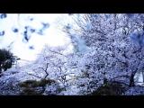 Kashiwa Daisuke - April.#19 (2012)