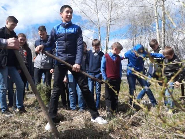 Учащиеся 26 школы высадили саженцы лиственницы, кедра и елей в знак памяти павших...