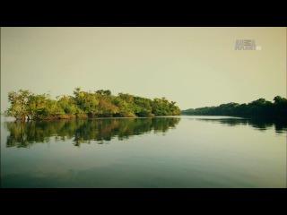 2-2. Неизведанные острова - Речные острова Амазонии - Заливной лес
