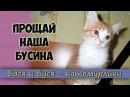 Прощай наша Бусина Наша кошечка УМЕРЛА Плачем и скорбим Видео в память о нашей любимой Бусинке