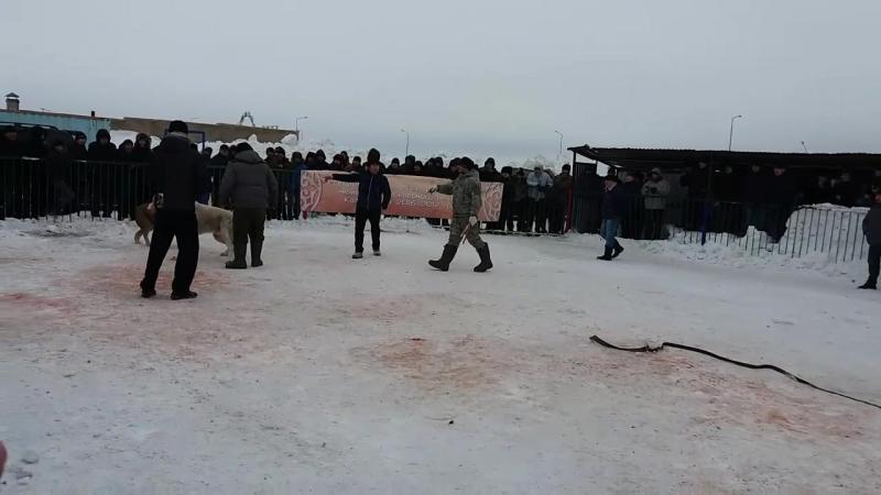 Каплан (петропавловск) Гоша (Усть-Камен.) 3 раунд Астана 04.03.17г