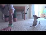 Йога с собачкой