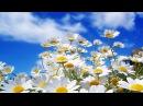 Весенний джаз (2) / Spring Jazz (2). – Acid Jazz Smooth Jazz • ВидеоКанал «exZotikA Max»