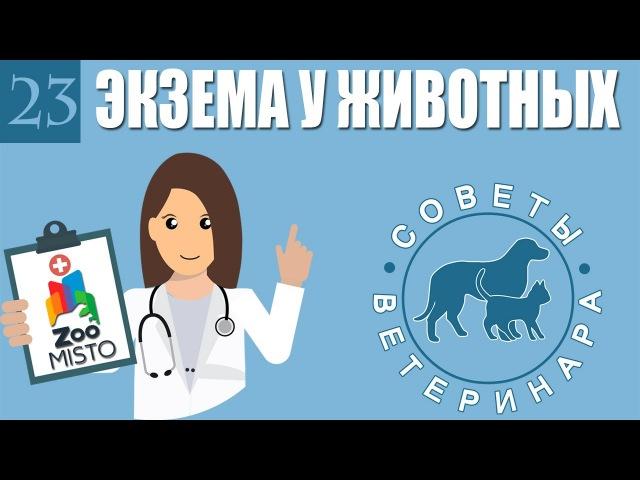 Экзема у домашних животных. Советы ветеринара