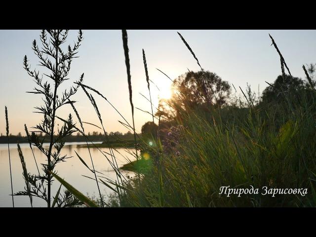 Природа. Музыка. Пение птиц. Релакс. Медитация. Звуки природы. Река. Слушать. Эмбиент(Йога, мантра, Шива, медитация, саморазвитие)