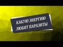 Какую энергию любят паразиты Николай Пейчев Академия Целителей
