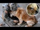 Dogs Crying When He Meets Owner After 2 year, 5 year,10 year...separation