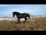 У лошадей начались каникулы. Воля,солнце и грязи-ну прям курорт