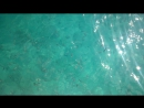 Кормление рыбок в Голубой Лагуне. Остров Комино. Мальта
