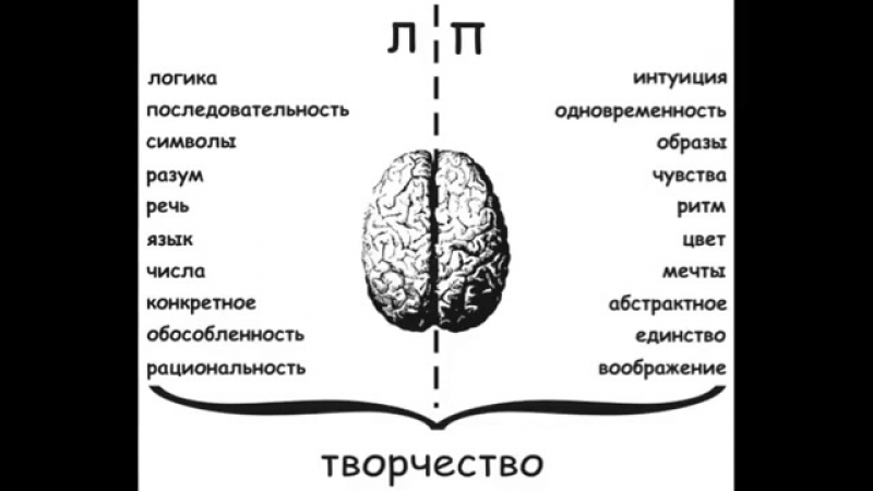 как развивать полушария мозга » Freewka.com - Смотреть онлайн в хорощем качестве