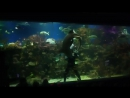 Океанариум в Санкт Петербурге Начало шоу кормления акул