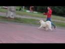 Белый Волк Юта