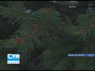 13.12.2016 Бесплатную вырубку елки оформит лесничий в нашей мэрии