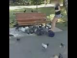 Девочка давит голубей на гироскутере.
