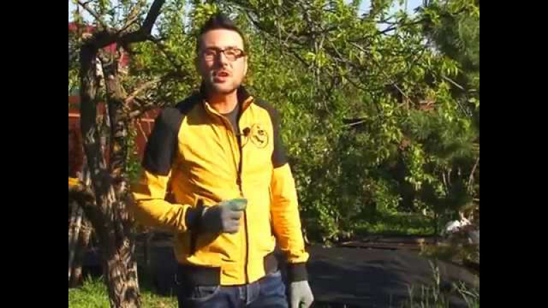 Как ухаживать за клубникой? Как посадить переросшую рассаду?