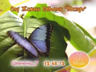 Сад Живых Бабочек Миндо в Хабаровске