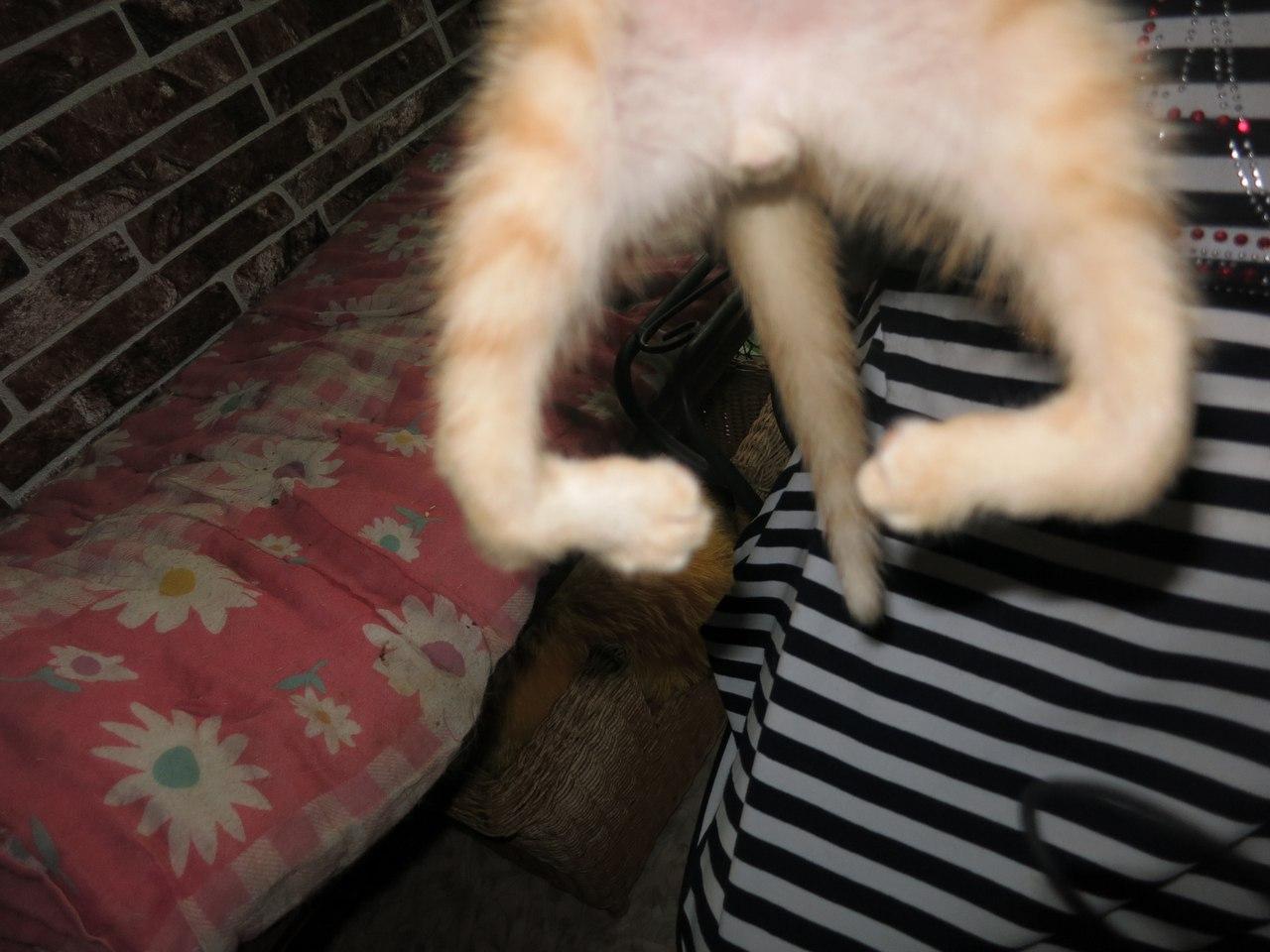 Похудели задние лапы у кошки