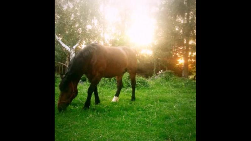 от рассвета до заката. один день жизни на ранчо