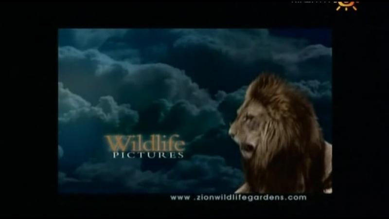 Animal Planet. Человек и львы (1-3 сезоны: 1-43 серии из 43) / The Lion Man / 2004-2008 /38