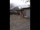 Пёс придурок 20140412_155418
