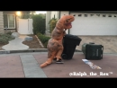 T-REX PROBLEMS_ TAKING OUT THE TRASH!