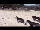 Собачки Бегут Купаться