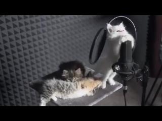 Котики исполняют мелодию