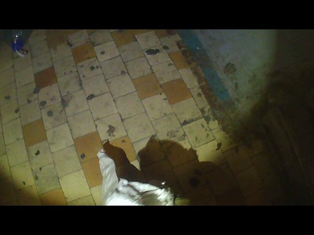 Спасатели МАСС ловят змею в квартире.