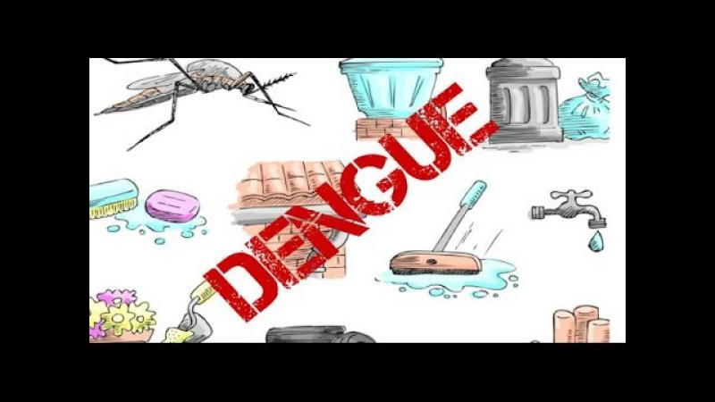 Dengue Mosquito Symptoms English Name Yellow Fever Mosquito Sceintific Name Aedes Aegypti