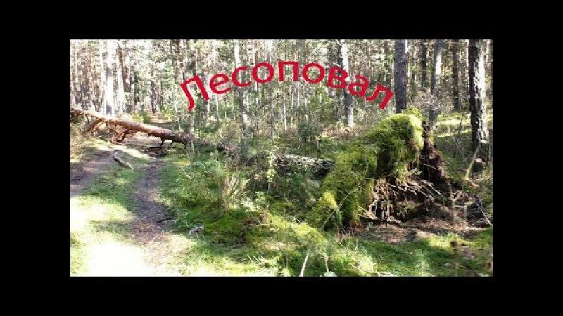 Лесоповал | Fallen trees
