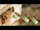 Все Секреты Пчеловодства !!ТРИ ПРАВИЛА УСПЕХА !!