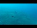 морские огурцыскат