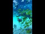 Кормление акул и скатов в Когалыме