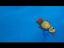 Лерочка в Детском бассейне BabyPool